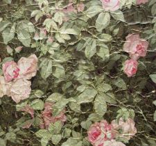 ROSES-ANCIENNES-P-11