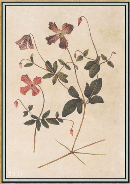 Английские обои Iksel,  коллекция Scenic & Architectural Wallpapers, артикулRenaissanceHerbierRH33