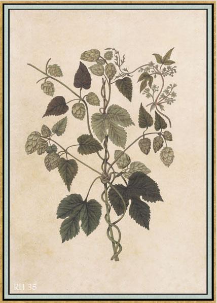 Английские обои Iksel,  коллекция Scenic & Architectural Wallpapers, артикулRenaissanceHerbierRH35