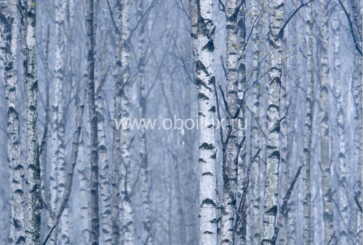 Шведские обои Eco,  коллекция Photo, артикул2433