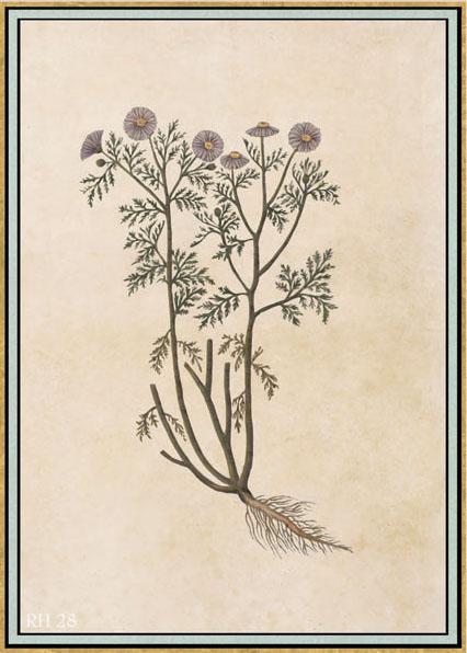 Английские обои Iksel,  коллекция Scenic & Architectural Wallpapers, артикулRenaissanceHerbierRH28