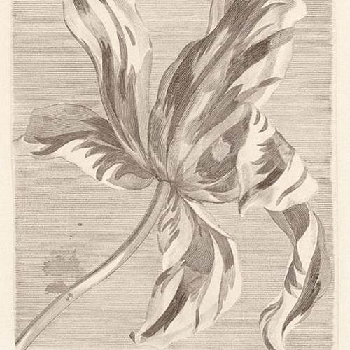 Обои  Eijffinger,  коллекция Masterpiece, артикул358117