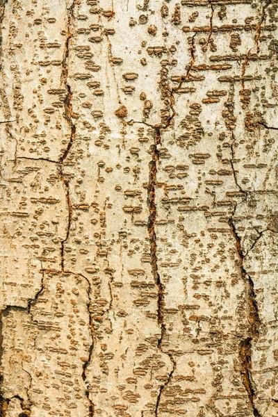 Российские обои ID Wall,  коллекция NO.2, артикулID026002/2