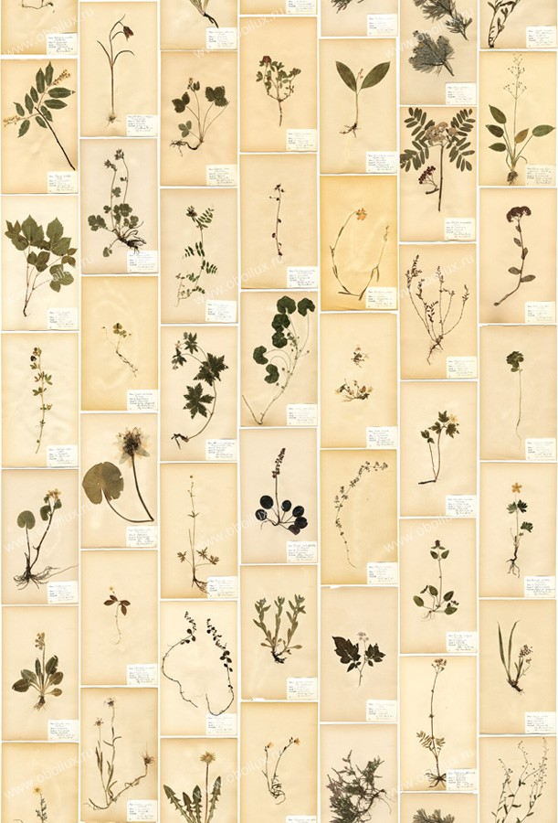 Шведские обои Borastapeter,  коллекция Garden Party, артикул3482