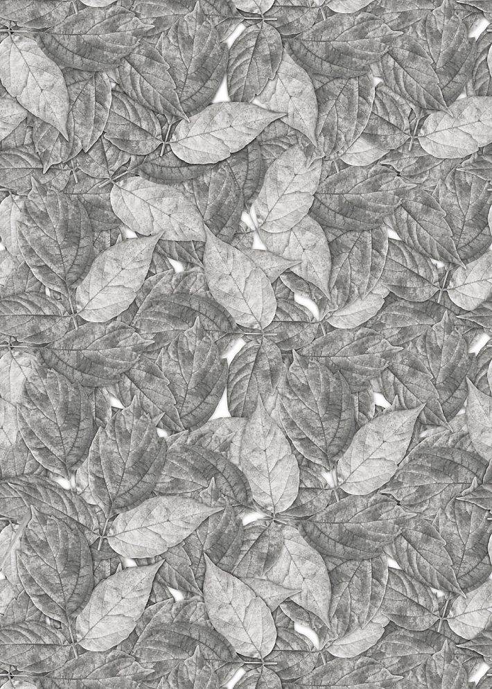 Российские обои ID Wall,  коллекция Botanica, артикулID048009