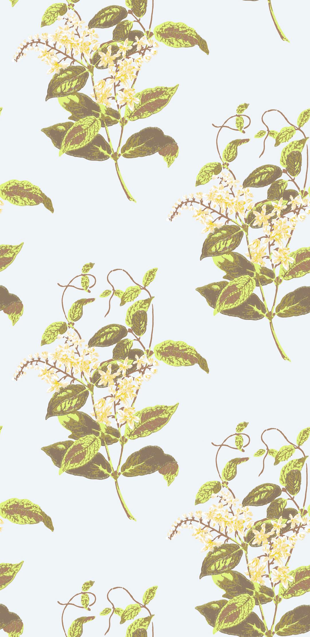 Английские обои Cole & Son,  коллекция Collection of Flowers, артикул81/6023