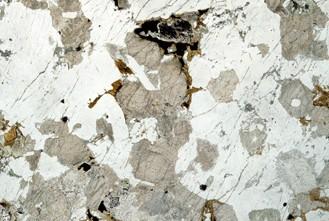 Бельгийские обои Atlas Wallcoverings,  коллекция Raphael 3, артикул1272-9