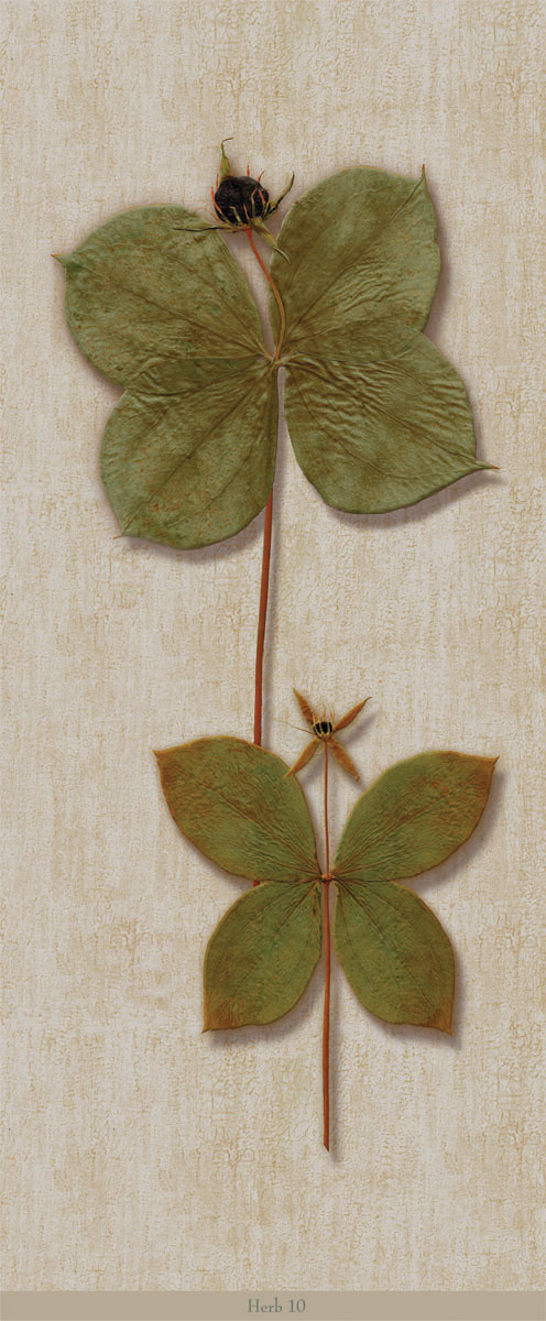 Английские обои Iksel,  коллекция Scenic & Architectural Wallpapers, артикулHerbierHerb10