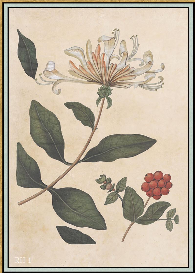 Английские обои Iksel,  коллекция Scenic & Architectural Wallpapers, артикулRenaissanceHerbierRH1
