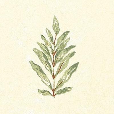 Американские обои Thibaut,  коллекция Palladio, артикулT8862