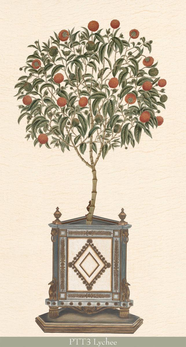 Английские обои Iksel,  коллекция Scenic & Architectural Wallpapers, артикулPottedPalmsPTT3Lychee