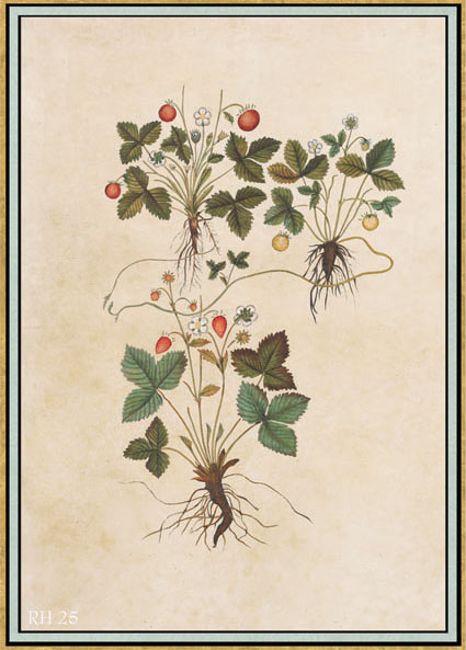 Английские обои Iksel,  коллекция Scenic & Architectural Wallpapers, артикулRenaissanceHerbierRH25