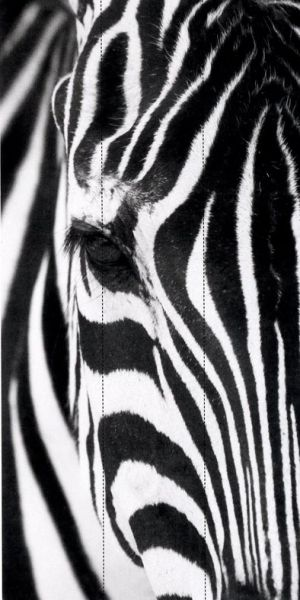Французские обои Caselio,  коллекция Black & White, артикулBTW61375000