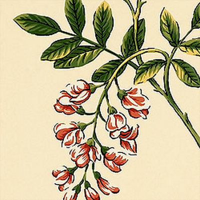Американские обои Thibaut,  коллекция Barbados, артикулT1644