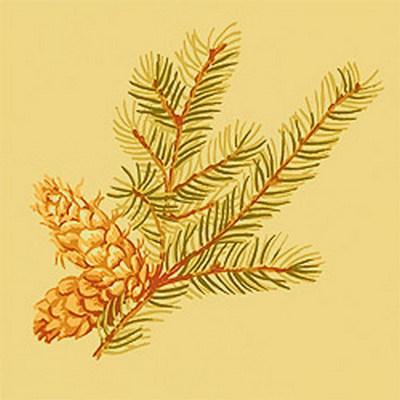 Американские обои Thibaut,  коллекция Castle Pine, артикулT6337