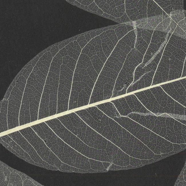 Американские обои York,  коллекция Designer Resource Grasscloth and Natural Wallpaper, артикулSE1800